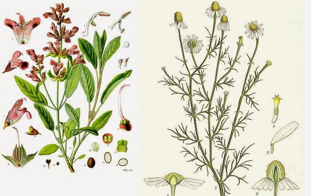 Zrób sobie kosmetyk: Wyciszajacy tonik ziołowy z szałwią i rumiankiem o zapachu lawendy.