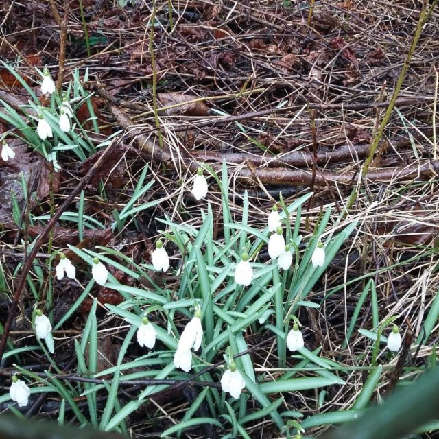 Na Wiczlinie ju wiosna !! wiosna Gdynia kwiaty