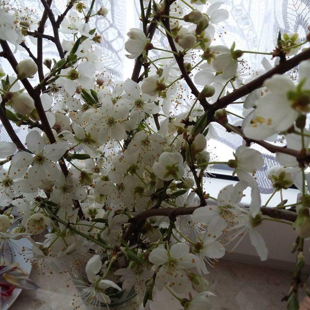 Przygarnelam troch wiosny do domu wiosna kwiaty Gdynia umiech smilehellip
