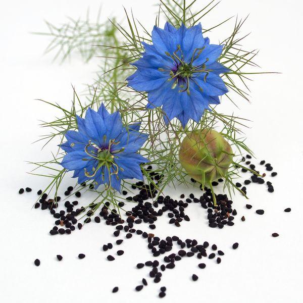 Olej z czarnuszki (czarnego kminku) – właściwości, zastosowanie i kosmetyki z czarnuszką